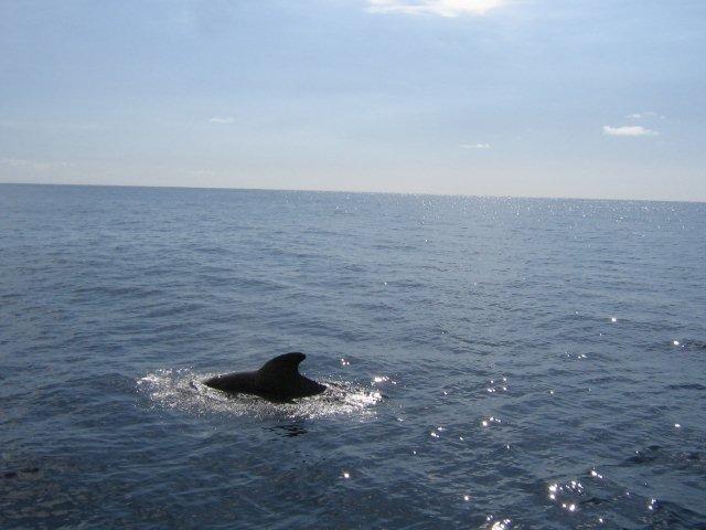 Fly-drive La Gomera - dolfijnen