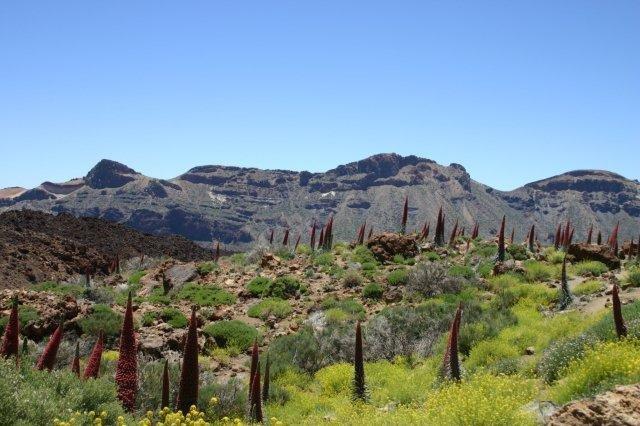 Fly-drive Mirador - El Teide
